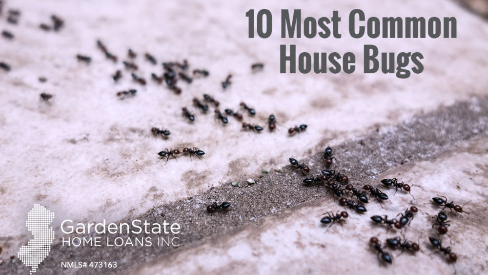common house bugs