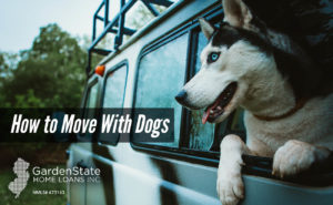 , How to Move with Dogs
