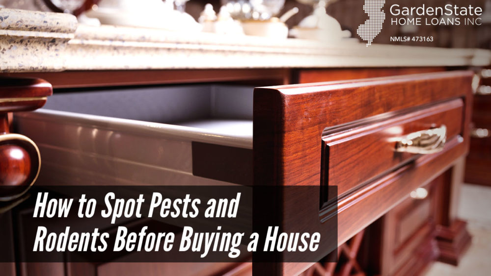 , How to Spot Pests and Rodents Before Buying a House