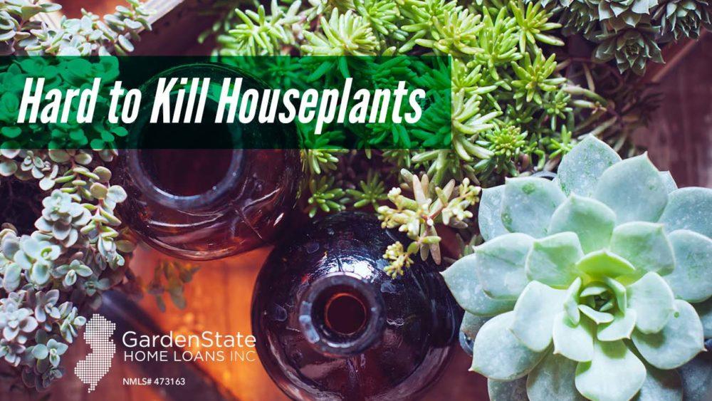 , Hard to Kill Houseplants