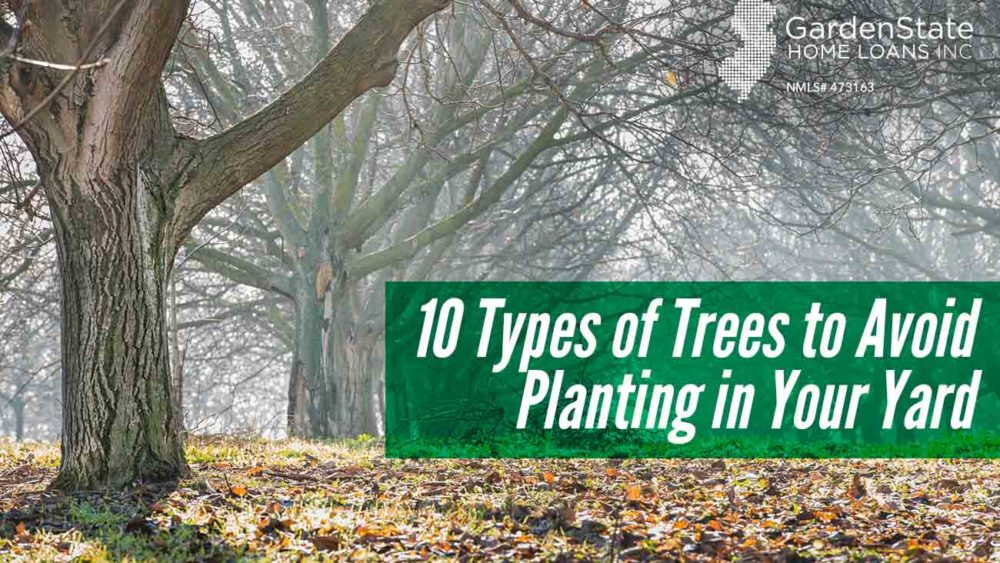 , 10 Types of Trees to Avoid Planting in Your Yard